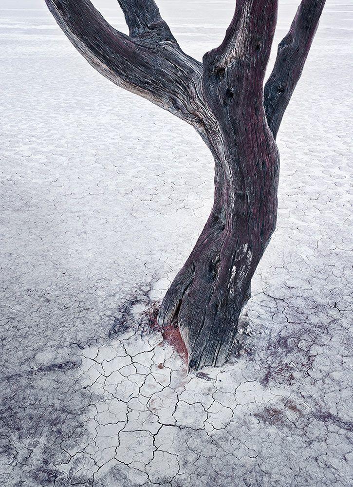Roger Arnall - Nature's Fragments series