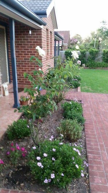 Pretty my garden