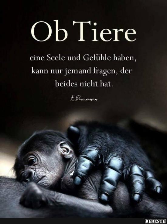 Ob Tiere eine Seele und Gefühle haben.. | Lustige Bilder, Sprüche, Witze, echt…