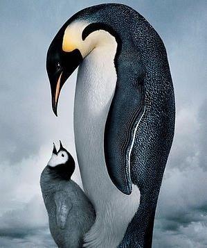 Pinguins...