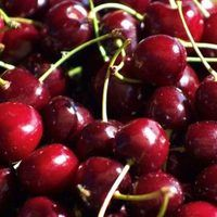 Starting cherry seeds indoors helps establish your fruit tree before the ground thaws outside. This helps your tree develop before the normal season begins. Cherry seeds require a period of cold before germinating. This is called stratification. Start your cherry seed indoors following this crucial step. Obtain cherry pits from a seed vendor:...