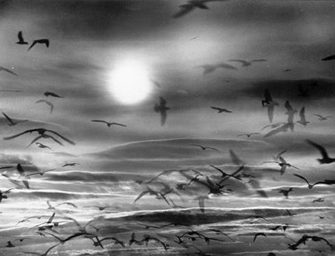 Giacomelli,, vol, icopyright Photology, Milan-Mario Giacomelli