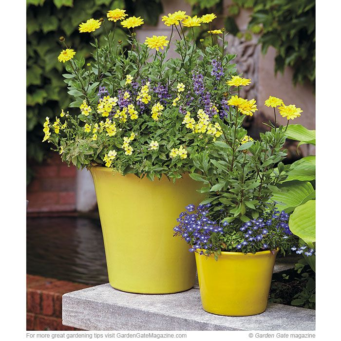 51 best gorgeous containers images on pinterest for Low maintenance potted plants