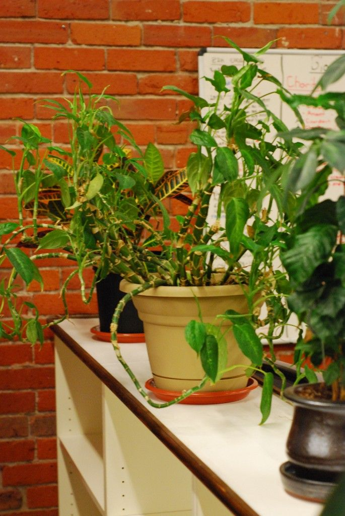 Best Office Plants: Good Plants For The Office Environment
