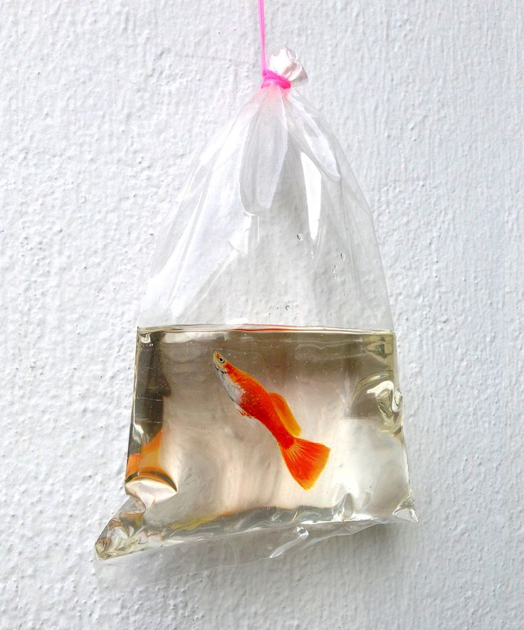 New Aquatic Wildlife Painted in Layers of Resin by Keng Lye - my favourite one. a memory from childhood.