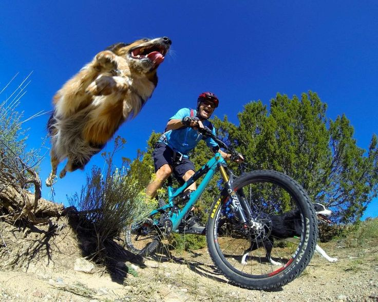Trail dog   awesome point of view