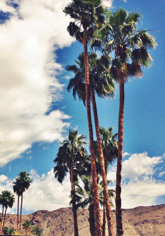 palm trees...sounds nice right about now