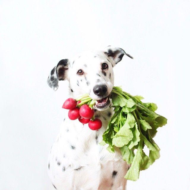 Les 351 meilleures images propos de design et plaisirs for Alimentation maison pour chien