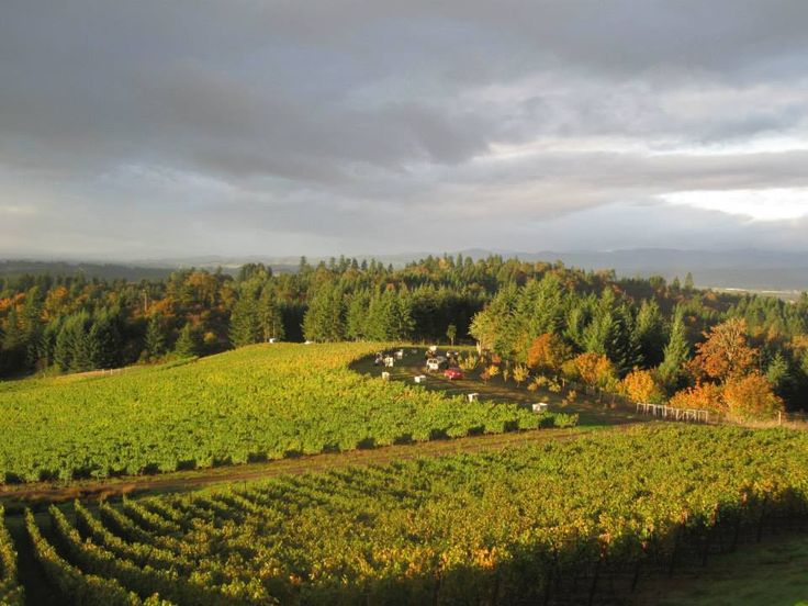An intimidating sky looms over a gorgeous fall day and harvest at Fairsing Vineyard in October 2013.