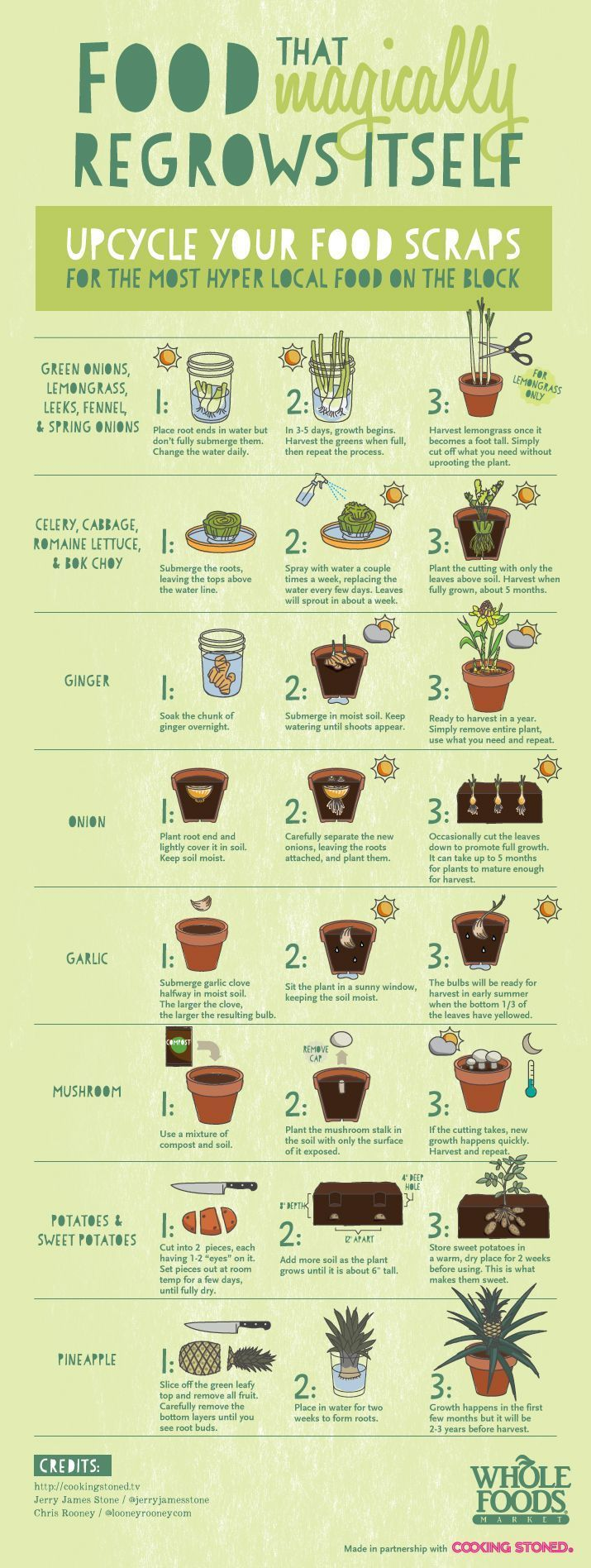 Be sure to upcycle your food scraps... All of this food will magically regrow…