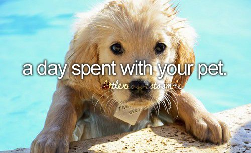 don't forget to smile: Animals, Puppies, Dogs, Golden Retrievers, Pool, Pets, Puppys, Things, Furry Friends