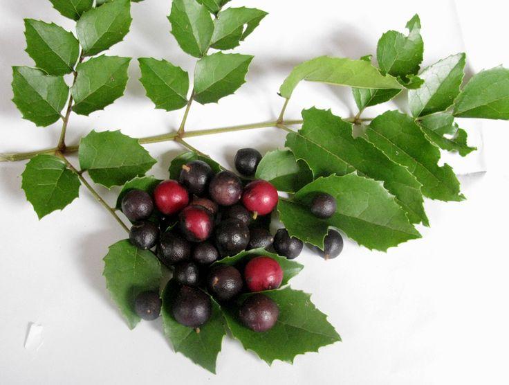 El Avellano chileno, un frutal resistente a las heladas - http://www.jardineriaon.com/avellano-chileno.html #plantas