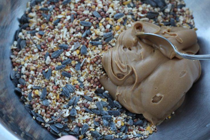 Diy peanut butter bird seed suet cake suet cakes