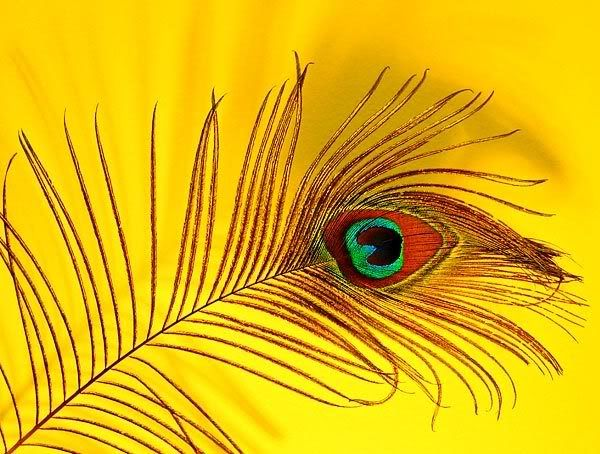 Yellow Peacock Feather Wallpaper