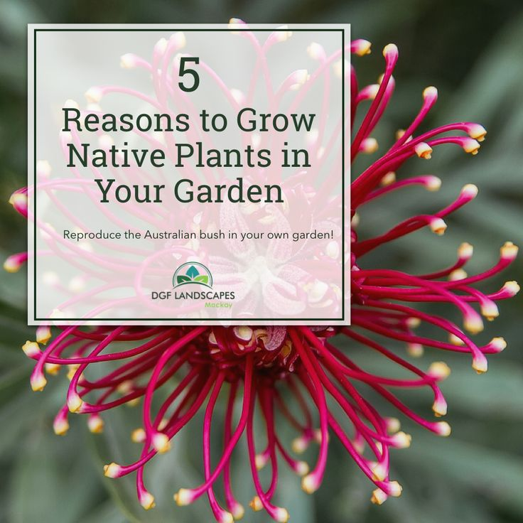 5 Reasons to Grow Native Plants in Your Garden   DGF Landscapes Mackay