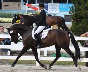 Ride in an English riding competition