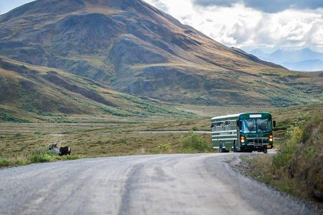 a green bus stopped on a dirt road with passengers looking out at a caribou-  BUS PRICING