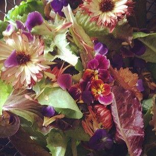 Spring Salad Mix. Homestead Design Collective.