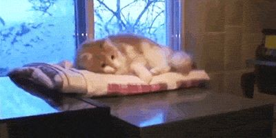 cats fate destiny accepted fail omg funny lol help falling gif gifs - Find and share funny GIFs on GIFsme