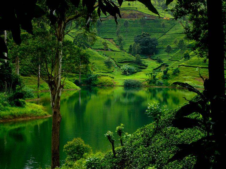 Hills Of Up Country, Sri Lanka