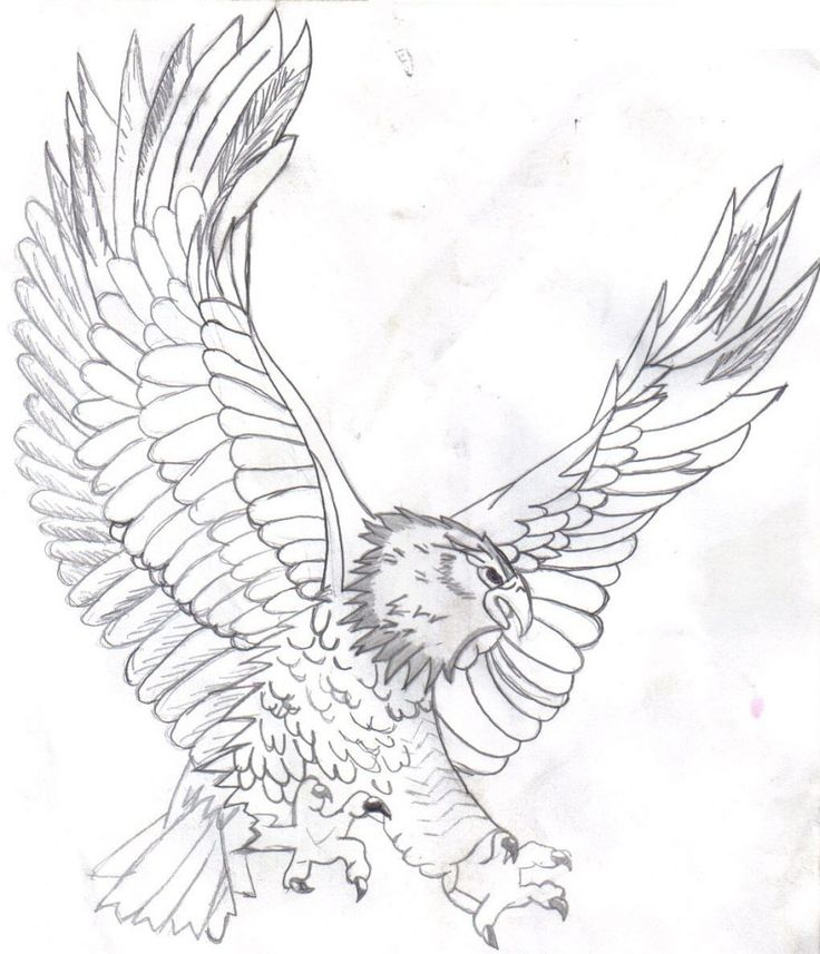 17 best images about eagles on pinterest pencil drawings eagle drawing and coloring pages
