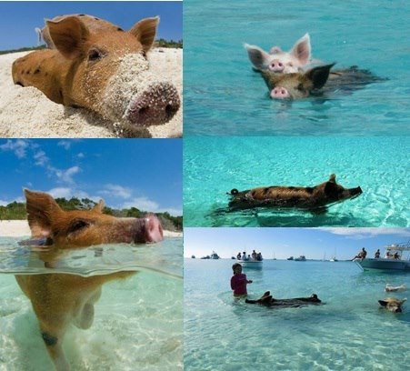 awwwww I want to be pig living there