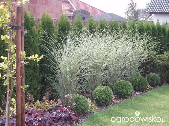 49 best plants images on pinterest gardening landscaping and garden deco. Black Bedroom Furniture Sets. Home Design Ideas