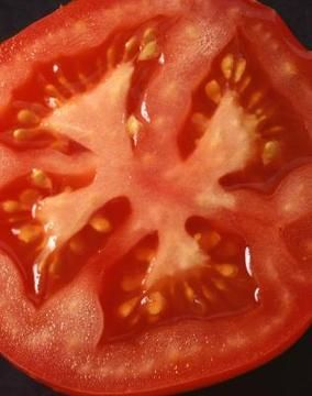 """Better Boy""' produces large red tomatoes suitable for slicing. 32 plants/ flat $17or 1 gallon potted  $7"