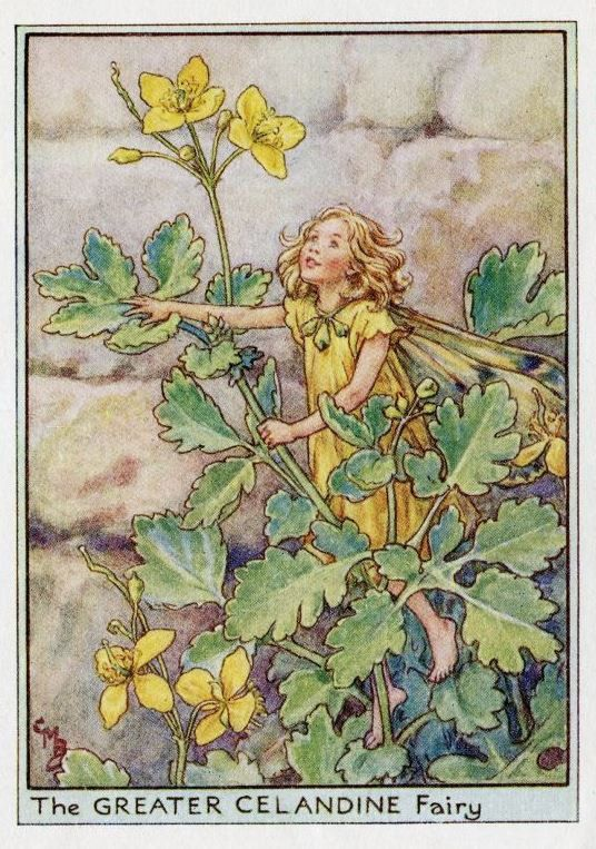 Greater Celandine Flower Fairy Vintage Print by TheOldMapShop