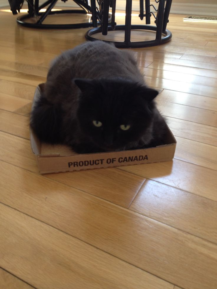 Georgie in another box
