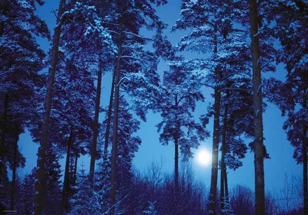1233 Best Elemental Moon Ya Fantasy Book Series Images