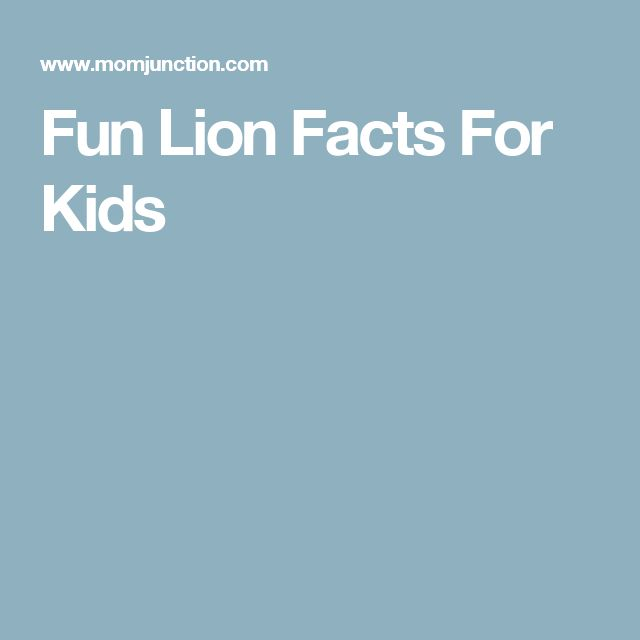 Fun Lion Facts For Kids