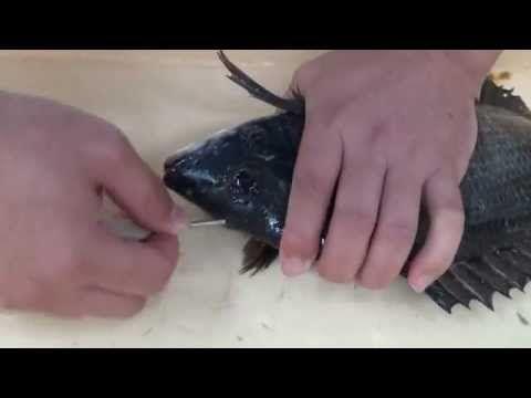 チヌ(黒鯛)神経〆