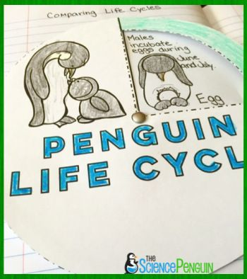 Free Penguin Life Cycle Wheel