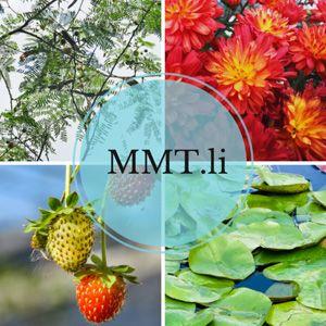 mmtli-cover-662x662.jpg