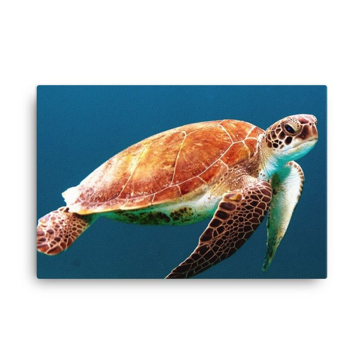 Sea Turtle Hand Stretched Canvas Print