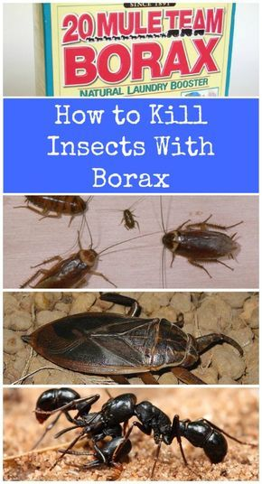 Borax is very effective at keeping cockroaches, ants, water bugs and a few other household pests at bay. - Top 10 Most Creative Household Uses for Borax