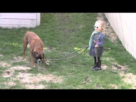 Linus the Boxer loves sticks
