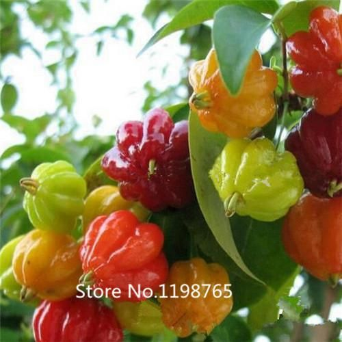[Visit to Buy] 2016 Hot 200 Chilly Red Hot Peter Pepper seeds chilly seed Bonsai plants vegetable Seeds #Advertisement