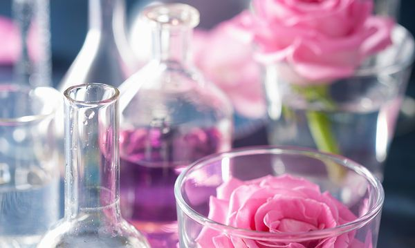 Premium Aromatherapy | Sagle | Untamed Alchemy | Shop