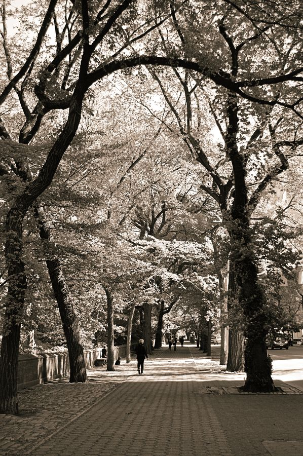 In the surroundings of Central Park