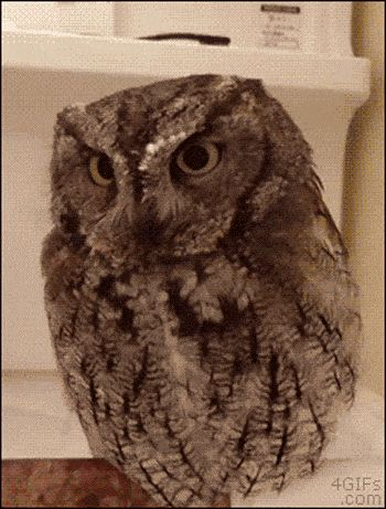 And this owl who wants none of this: | 28 Animal GIFs Guaranteed To Make Your Worries Disappear