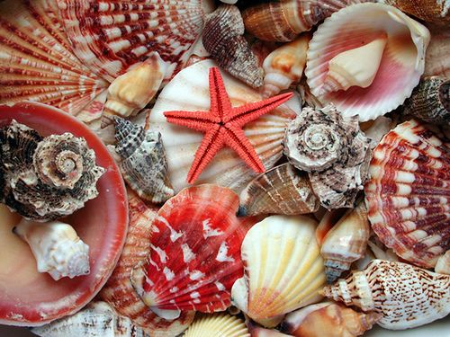 conchas e corais - Pesquisa Google