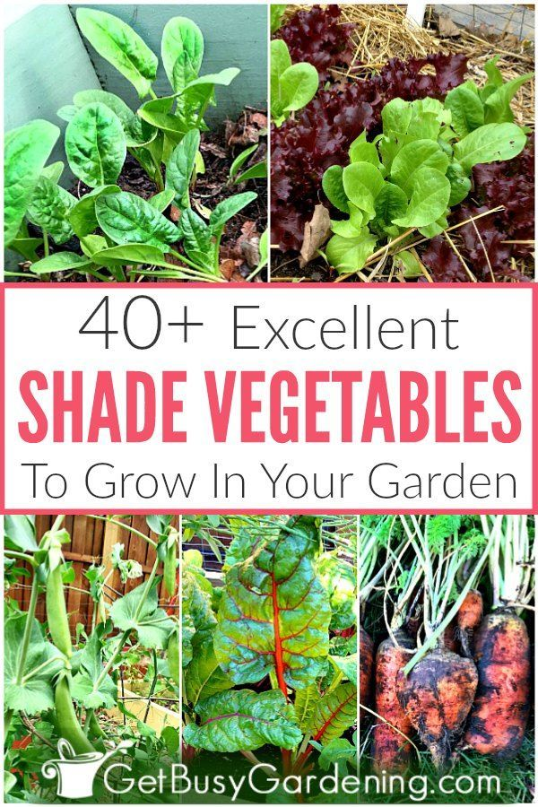 40 Vegetables That Grow In Shade Growing Vegetables Vegetable Garden Planner Planting Vegetables