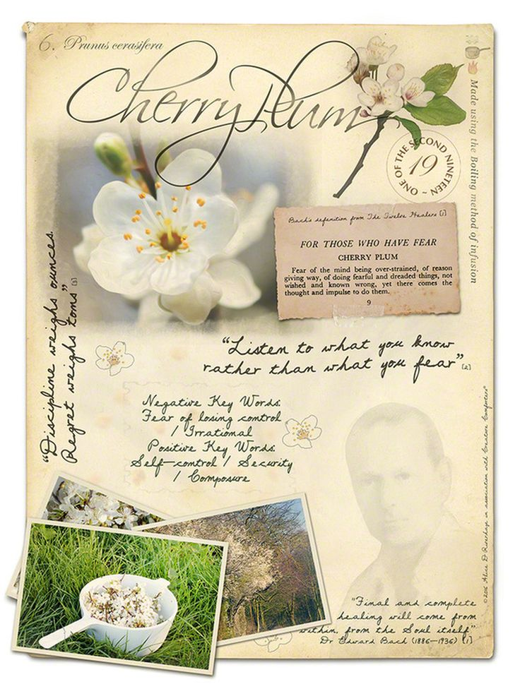 Cherry Plum Bach Flower Picture Card