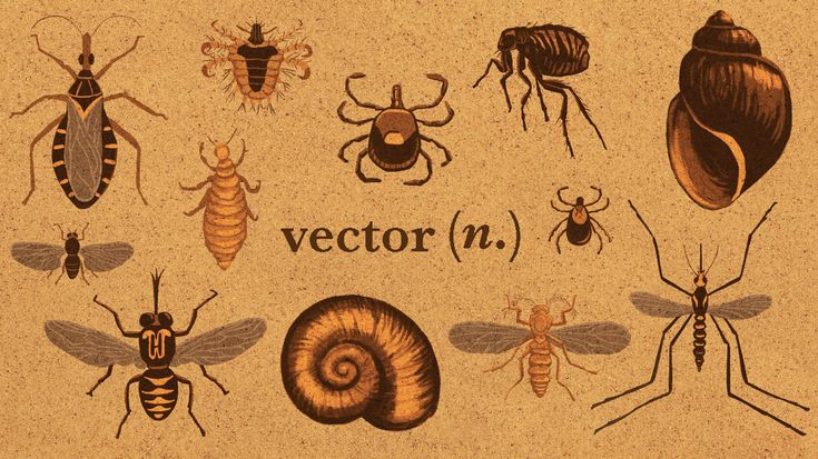 Vector. The world of infectious diseases has more than a few words and phrases you might want to know more about. We've got definitions for 11 key terms.
