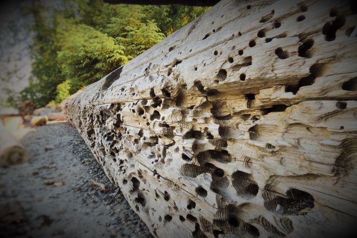 Beach log