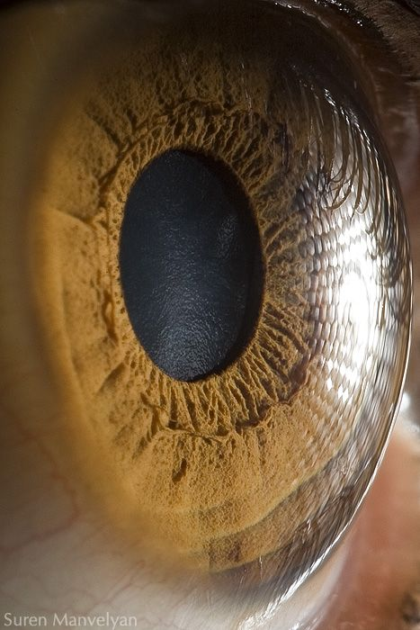 Eye. I absolutely love how the light reflected in the pupil makes it look like  pool of dark water!