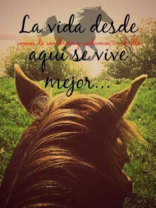 tras las orejas de un caballo♥