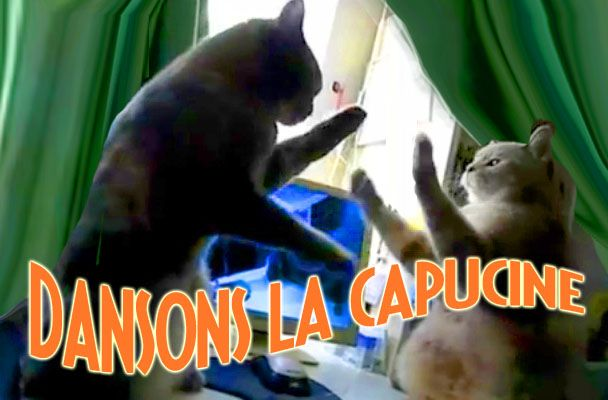 Cats Singing and Dancing in French -- So Ridiculous, It's Terrific (Dansons la Capucine!)